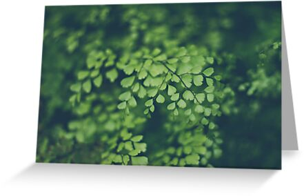 Little Green Leaves by Bethany Helzer