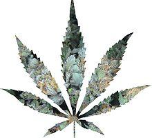 Pot Leaf by mstark