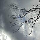 Dead Tree by Maggie Hegarty