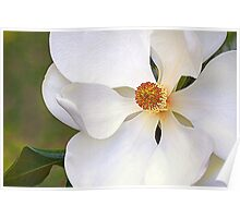 Southern Magnolia 2 Poster