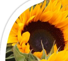 Sunflower Cat Sticker