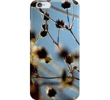 Cool Breeze - TTV iPhone Case/Skin