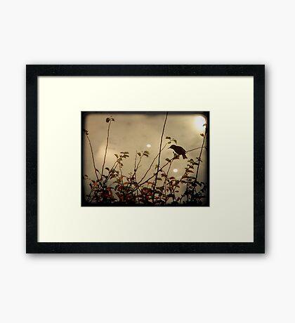 Bird in the Bush Framed Print