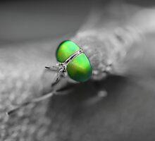 Alien Fly by AroundOurWorld