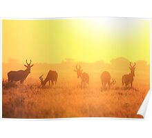 Red Hartebeest - Golden Symmetry - African Wildlife Poster