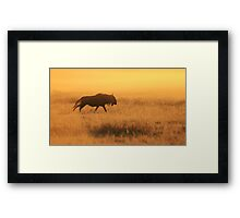 Blue Wildebeest - African Wildlife - Nature's Faded Gold Framed Print