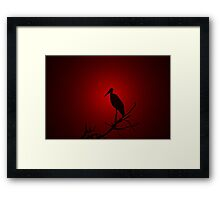 Marabou Stork - Sunset Red - African Wild Birds Framed Print