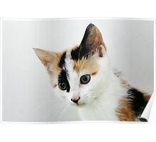 The Naughty Tortie Poster