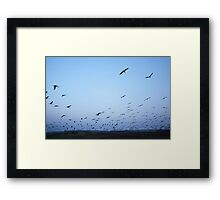Common crane (Grus grus). Framed Print