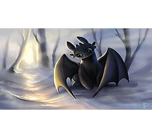 Toothless In Snow Photographic Print