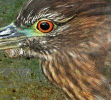 Black Crowned Night Heron Sticker