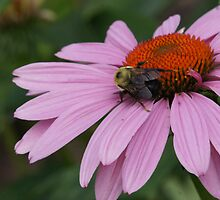FLOWER WITH BEE by pjm286