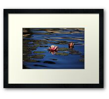 Water Lilies on the Pond Framed Print