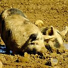 Happy As A Pig In Mud by Gabrielle  Lees