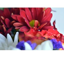Macro on colorful flower petals in watercolor style Photographic Print