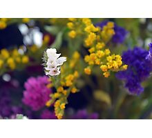 Colorful blurry small flowers pattern. Photographic Print