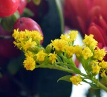 Natural background with small yellow flowers and red fruits. Sticker