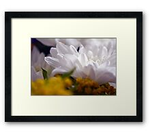 Natural background with white petals and small yellow flowers. Framed Print