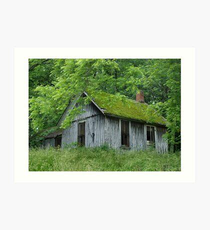 Green Roof Art Print