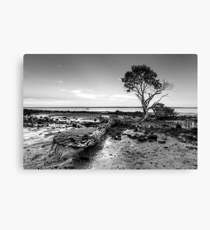 Tenby Point - Mangrove Sunset Black and White Canvas Print