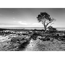 Tenby Point - Mangrove Sunset Black and White Photographic Print