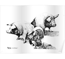 These Little Piggies by Marg Thomson Poster