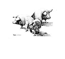 Three Little Piggies by fullcirclemandalas  is Marg Thomson