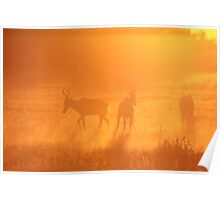 Red Hartebeest - Sunset Gold Silhouette - African Wildlife Poster