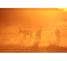 Red Hartebeest - Sunset Gold Silhouette - African Wildlife Photographic Print