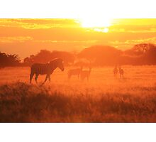 Zebra - Sunset Gold - African Wildlife Background Photographic Print