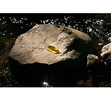 Yellow leaf on a rock in stream Photographic Print