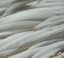 Abstract feathers by Themis