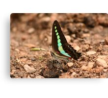 Butterfly - 6 Canvas Print