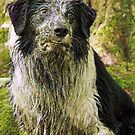 Mucky Pup by meg price