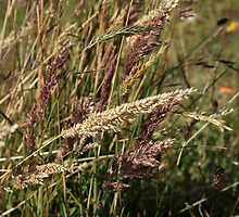 Colored Grass at Lake Cuicocha by rhamm