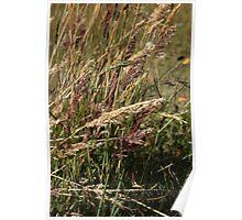 Colored Grass at Lake Cuicocha Poster