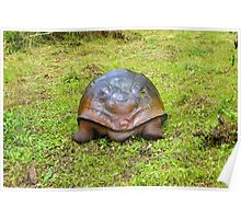North End Of  Galapagos Giant Tortoise Going South Poster