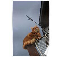 Ginger cat on gatepost Poster