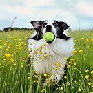 Fetch! by meg price