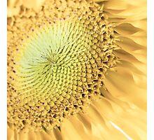 Sunflower Macro Photographic Print
