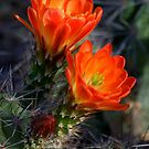 """"""" Desert Color """" by K D Graves Photography"""