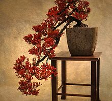 Bonsai Beauty by Jessica Jenney