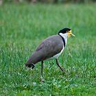 Unidentified bird :) by micturn