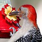 Red Bellied Woodpecker by Dennis Cheeseman