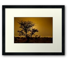 a desert oasis at sunset Photographed in Israel, Negev Desert Framed Print