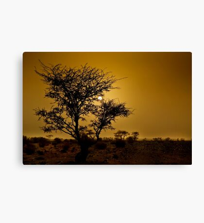 a desert oasis at sunset Photographed in Israel, Negev Desert Canvas Print