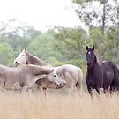Winter Horses by Penny Kittel