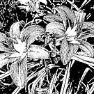 Lilies of the Woodcut by Monnie Ryan