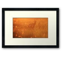 Red Hartebeest - Sunset Field of Gold - African Wildlife Framed Print