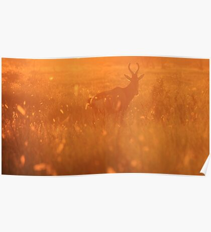 Red Hartebeest - Sunset Field of Gold - African Wildlife Poster